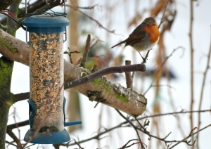 Clean bird feeders this winter