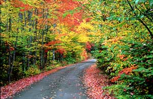 Maine Fall Foliage (Moxie, ME).  Click here for more Maine travel info...