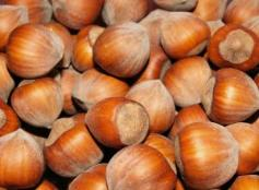 You can grow nuts in New England