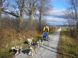 Dog Carting in a road in Vermont
