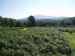 Mt. Monadnock in the distance.  Photo by Marcia Passos Duffy