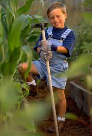 Do you have a family member willing to help out in the garden? Children are especially helpful for undertaking tasks adults often dislike, such as chucking stones out of the soil, or hand picking insects off plants.